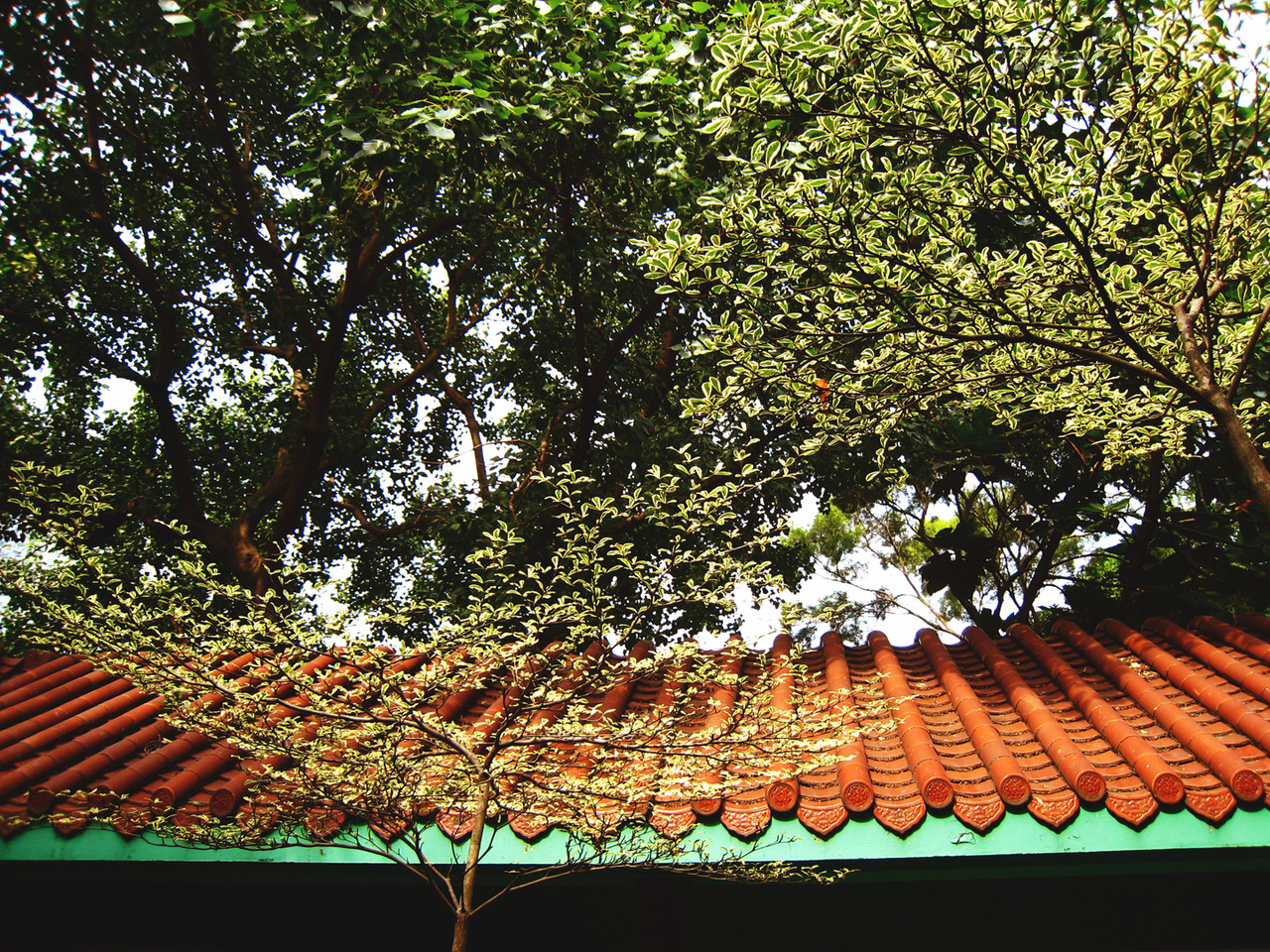 Roof spirits    Behind the shrubbery maze of Kowloon Park there is a path alongside the bamboo forest.   Look up.