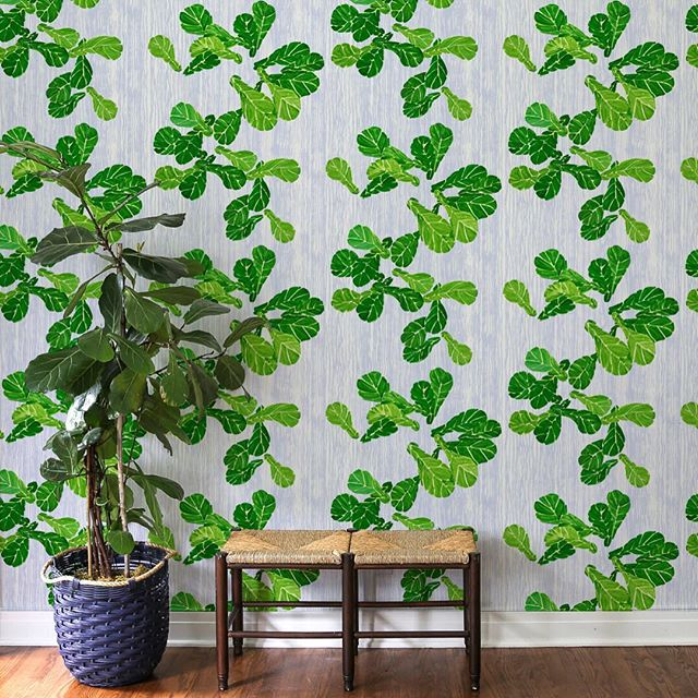 Here's a new @ferrickmason wallpaper for everyone out there who has trouble keeping a fiddle leaf fig tree happy & healthy (ahem me 👋)