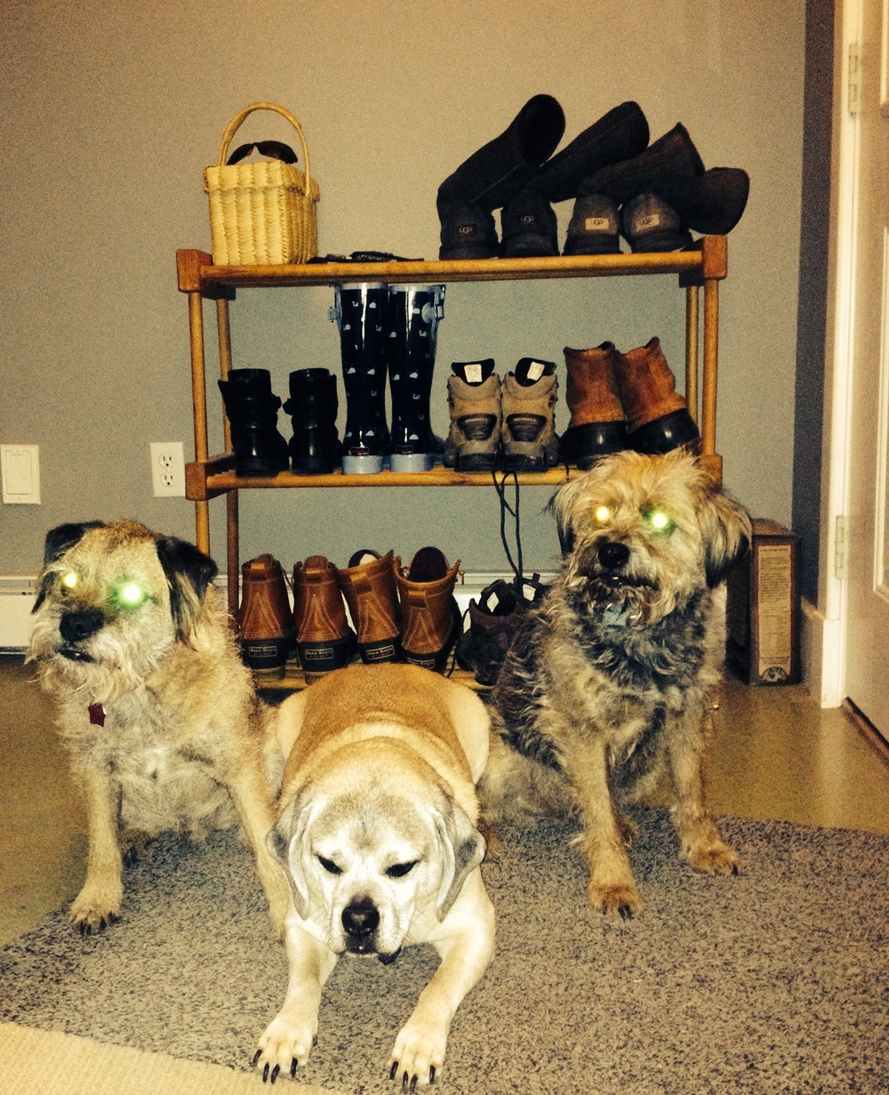 None of these three good dogs is actually evil. Their owner just can't figure out how to make their eyes look normal. They are posing with our collection of snow boots, hoping a walk is in their future.