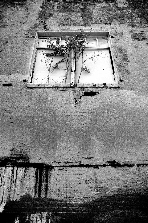 windowindeepellum.jpg