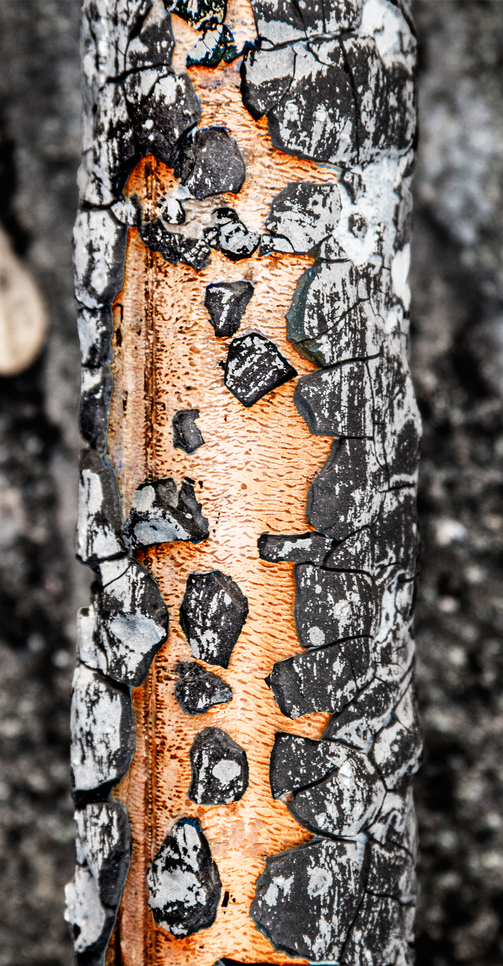 brass-tube.jpg