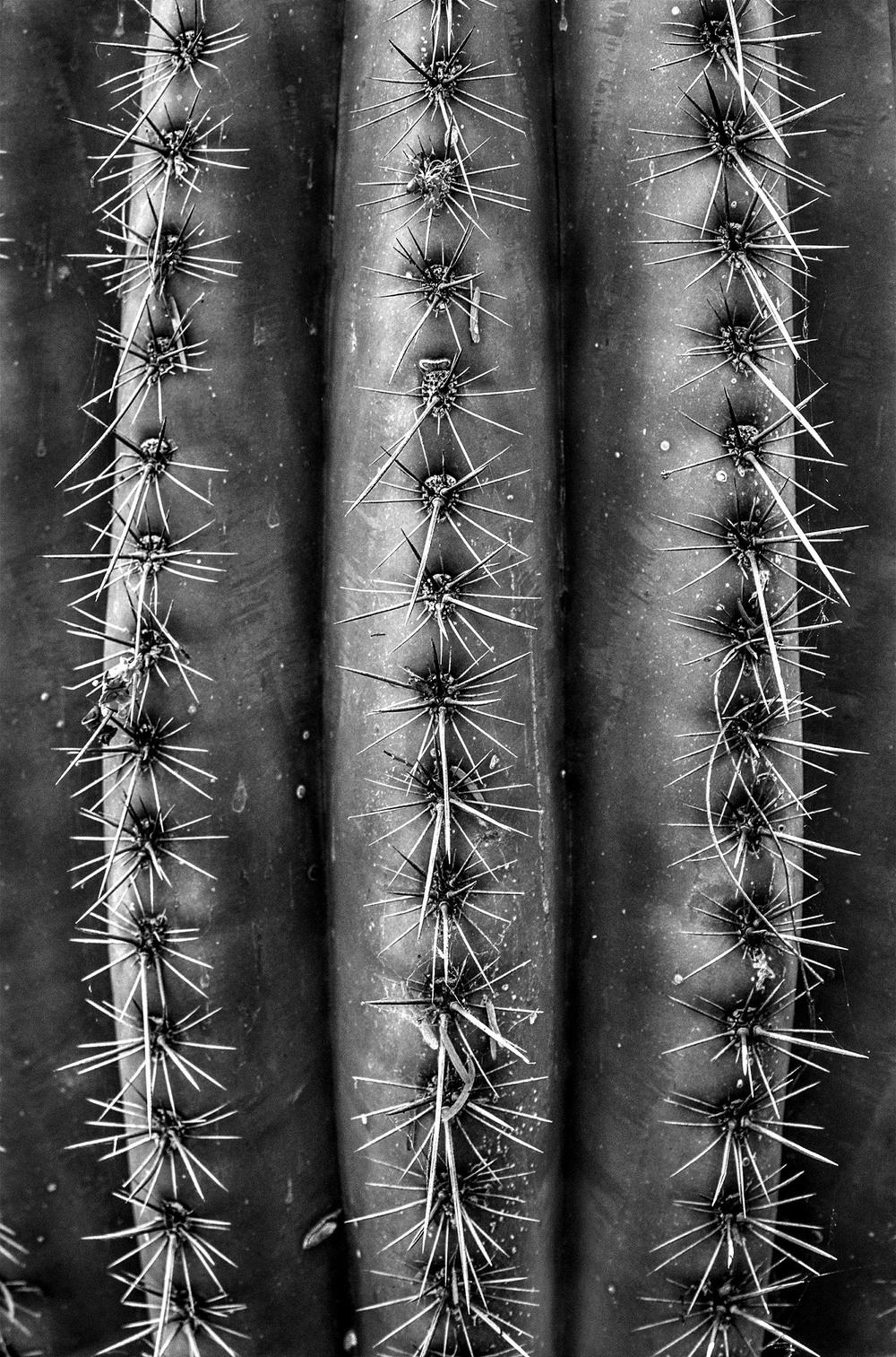 closecactus.jpg