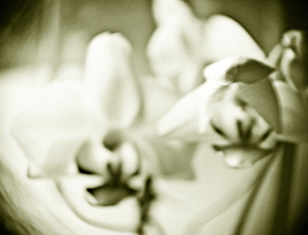 pictorialism-flower.jpg