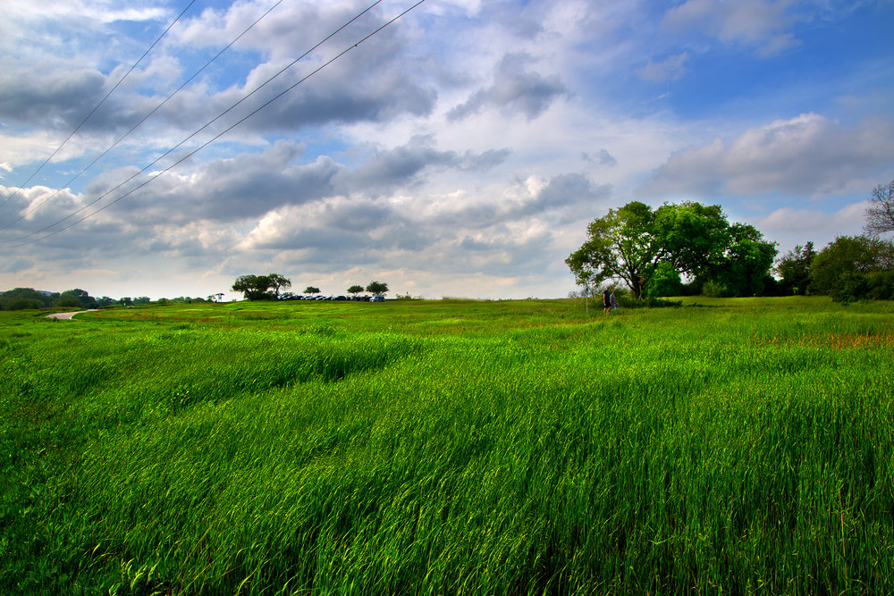 Field Landscape Color.jpg