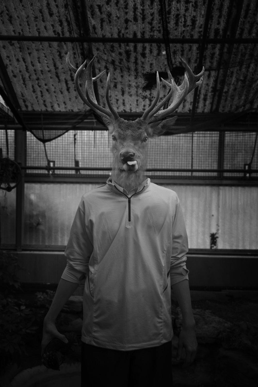 Parker Deer.jpg
