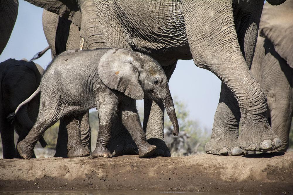 elephan JPEG.jpg