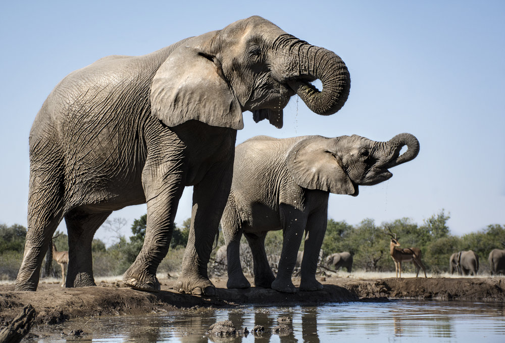elephants 2 JPEG.jpg
