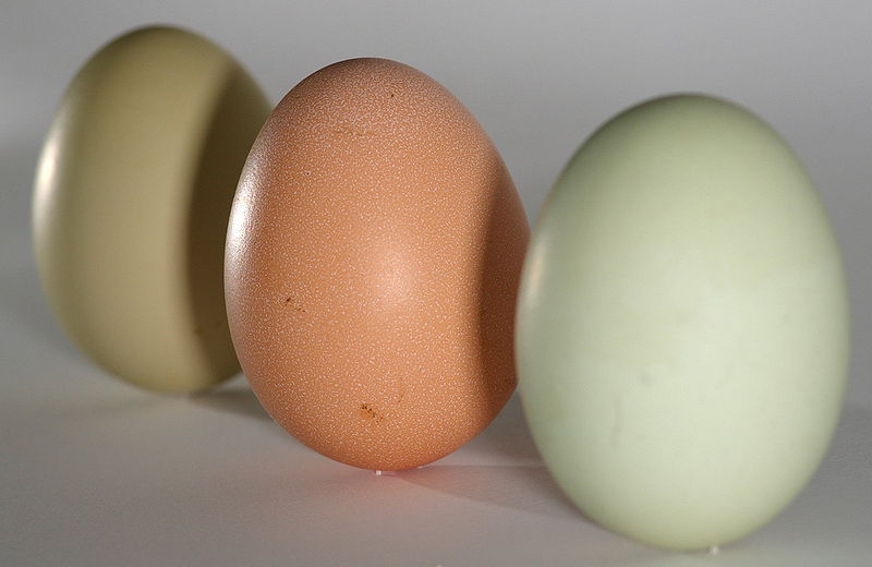 800px-Eggs_green_brown_on_end.jpg