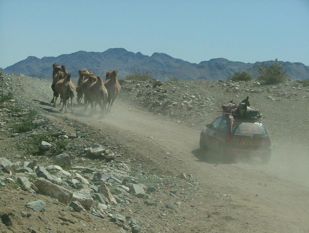 Mr-09-shane-camels.JPG