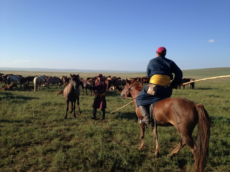 Rounding up horses for the first day of pre-race training on the steppe - photo by Joey Dawson