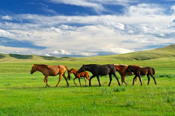 Mongol Derby 2013 – Day 8 Prometheus Medical crew captures a stunning Mongolian landscape