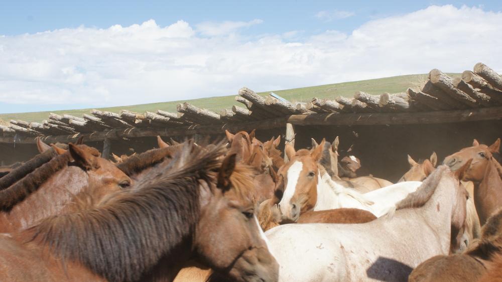 The horses of U5
