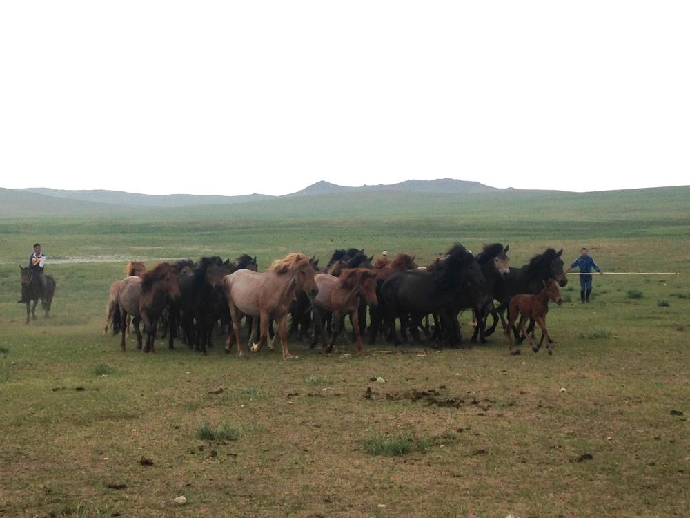The roan horses of U13