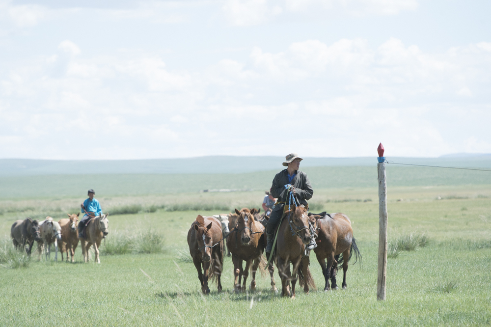 A herder tending his horses at HS7