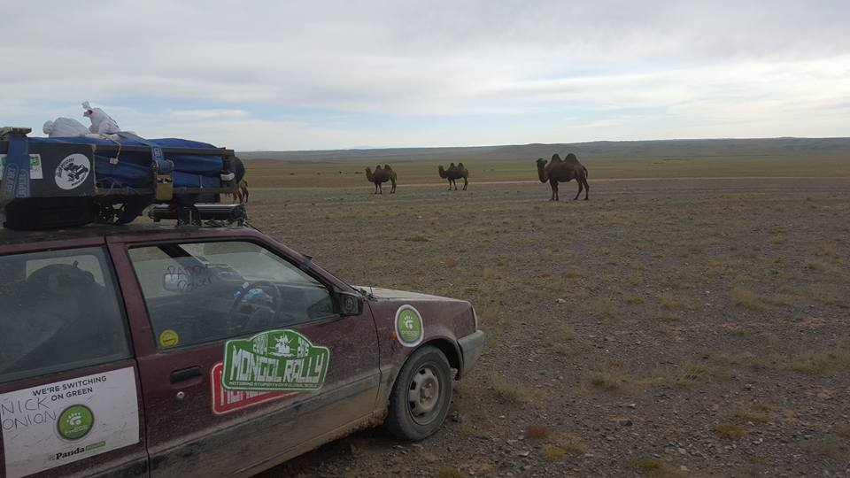 pale paddys in mongolia with camels 09.09.2015.jpg