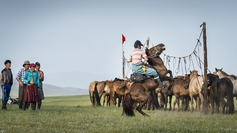 Photo by Richard Dunwoody for Mongol Derby 2016
