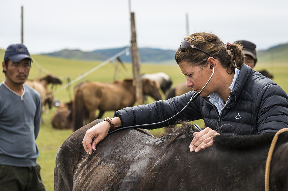 Vet Emma Alsop checks Marie Griffis' horse at HS15 under the watchful eye of herders  Photo by Richard Dunwoody for Mongol Derby