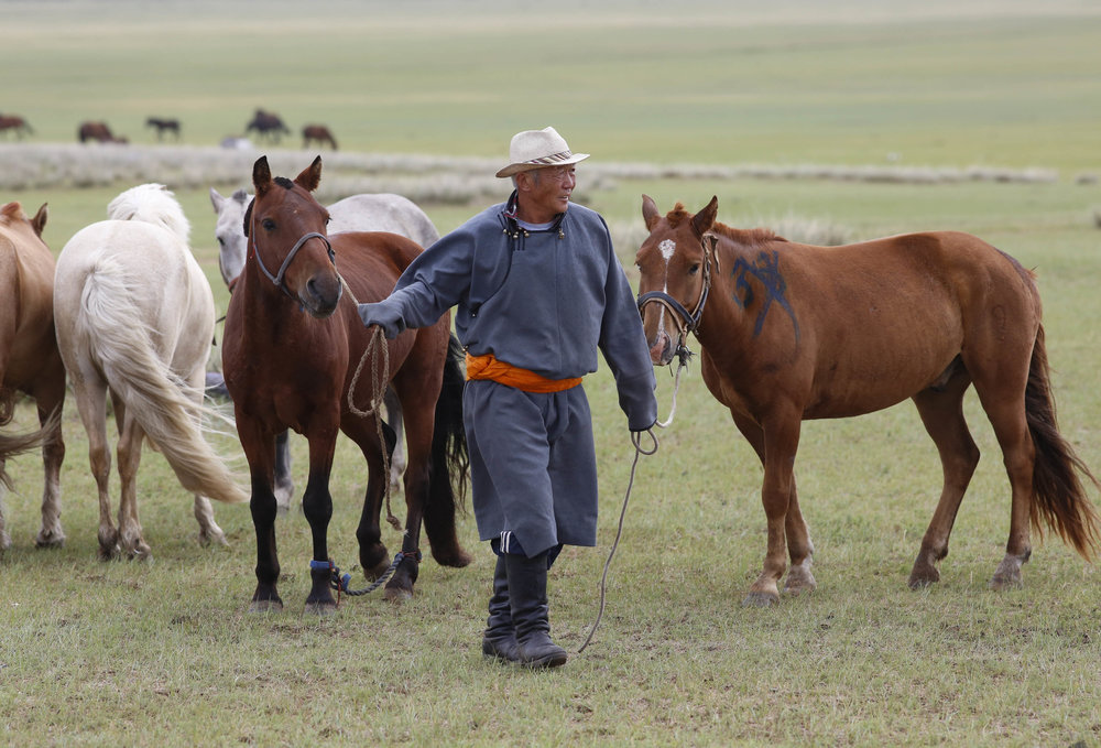 A heardsman gathers horses during day 2 of The 2017 Mongol Derby on 10.8.2017. in Mongolia. Picture by: (C) Julian Herbert.