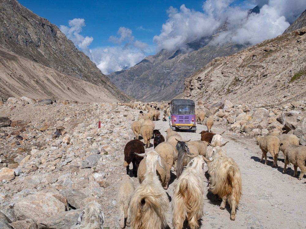 Rickshaw Run Himalaya6.jpg