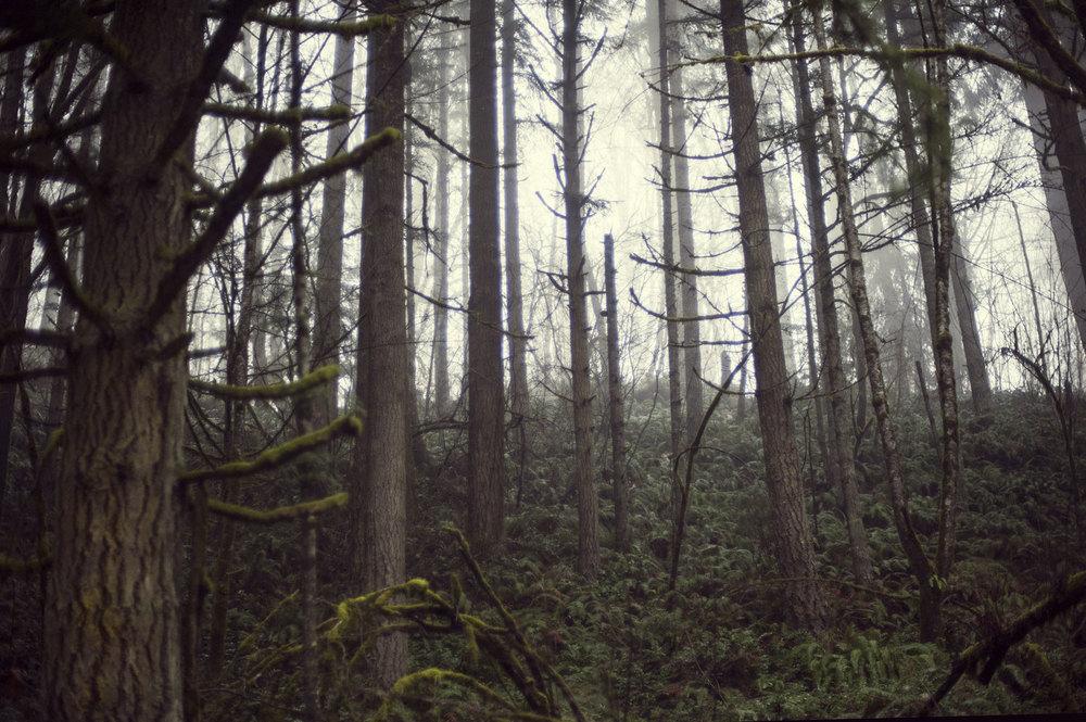 Beautiful coastal forest near Portland, OR.