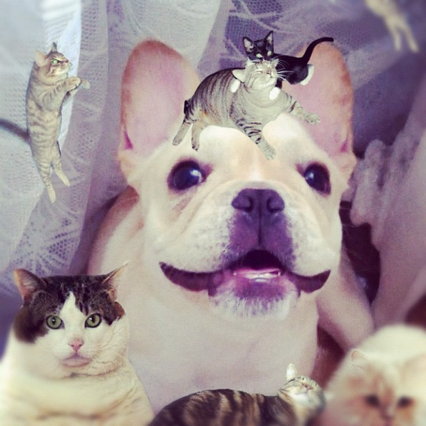 She's done nothing to deserve this. #catpaint / on Instagram  http://instagr.am/p/LnfiXfvDGc/