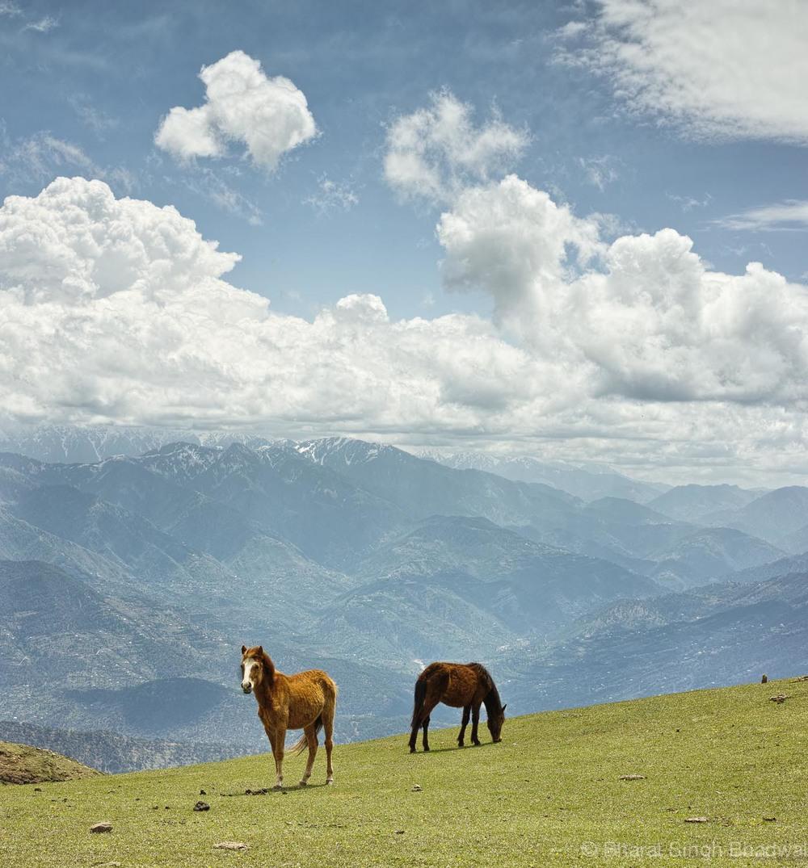 horses grazing at Chorgala.jpg