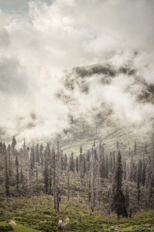 mist over forest.jpg
