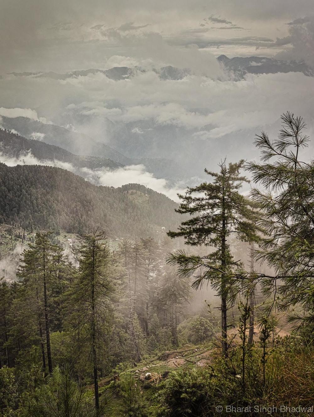 peering though the mist .jpg