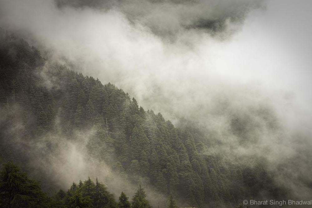 patnitop woods covered with clouds