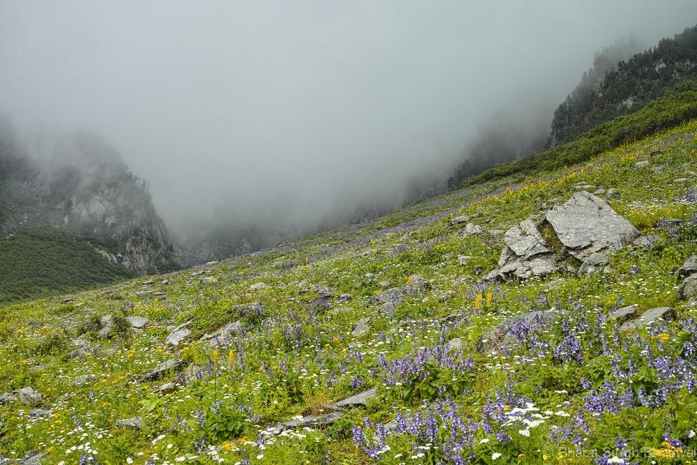 flowers near Sonbain glacier
