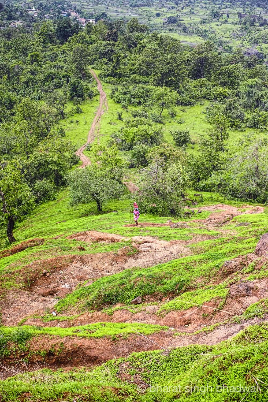 Zigzags along Irshalgad ridge