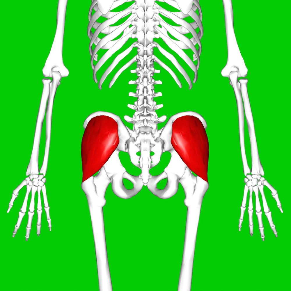 Gluteus Medius muscle highlighted in red. By Anatomography (en:Anatomography (setting page of this image))  CC BY-SA 2.1 jp , via Wikimedia Commons