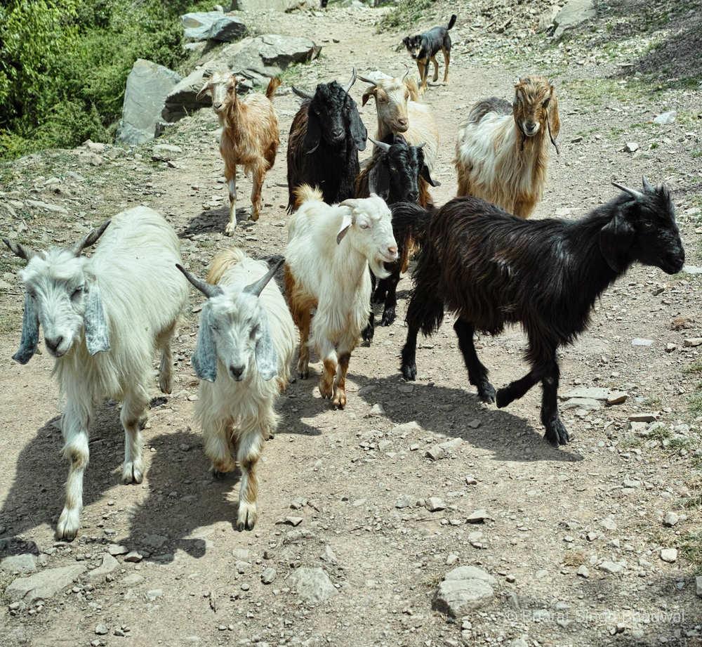 A Himalayan roadblock