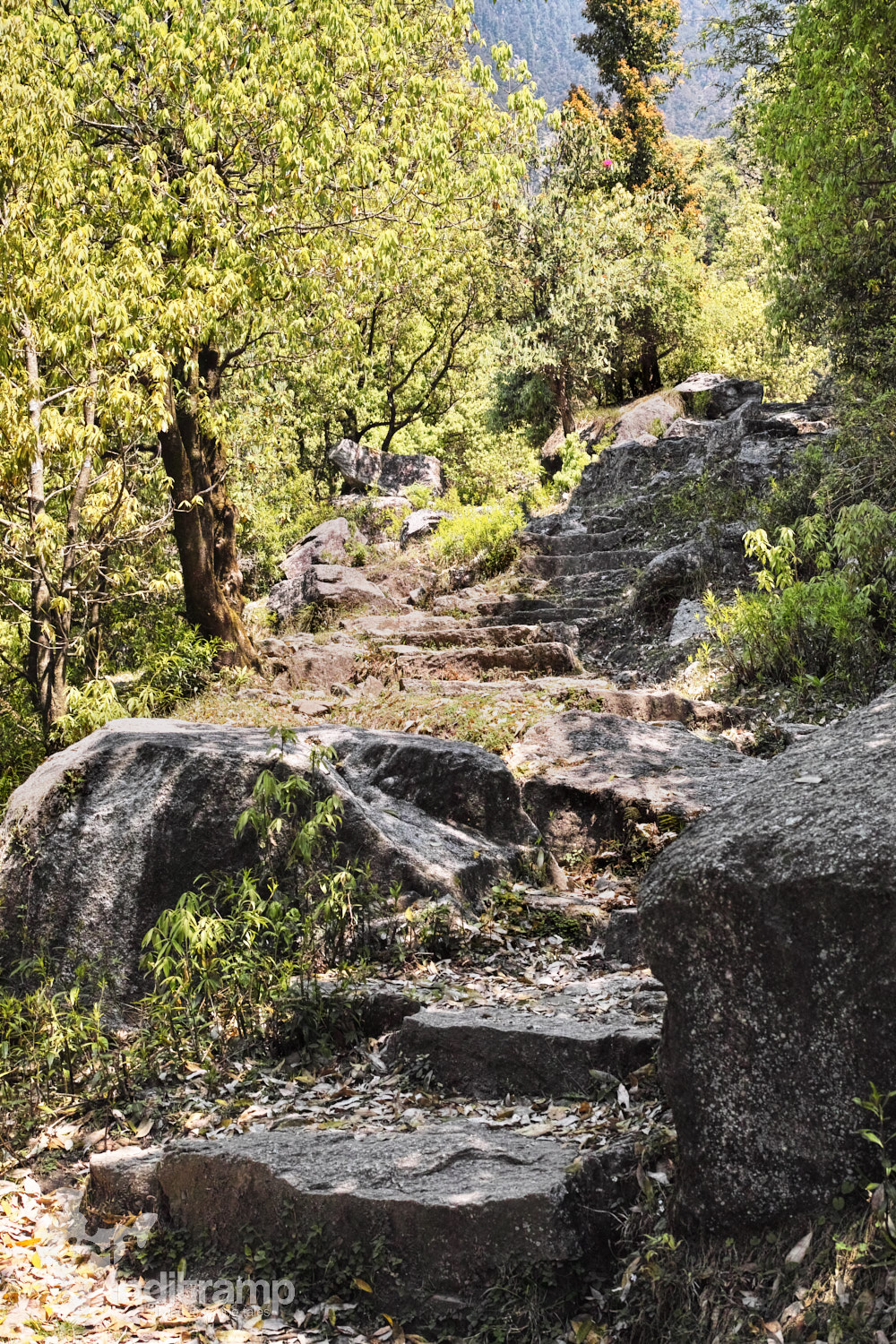 The path undulates between a level stone path and carved steps