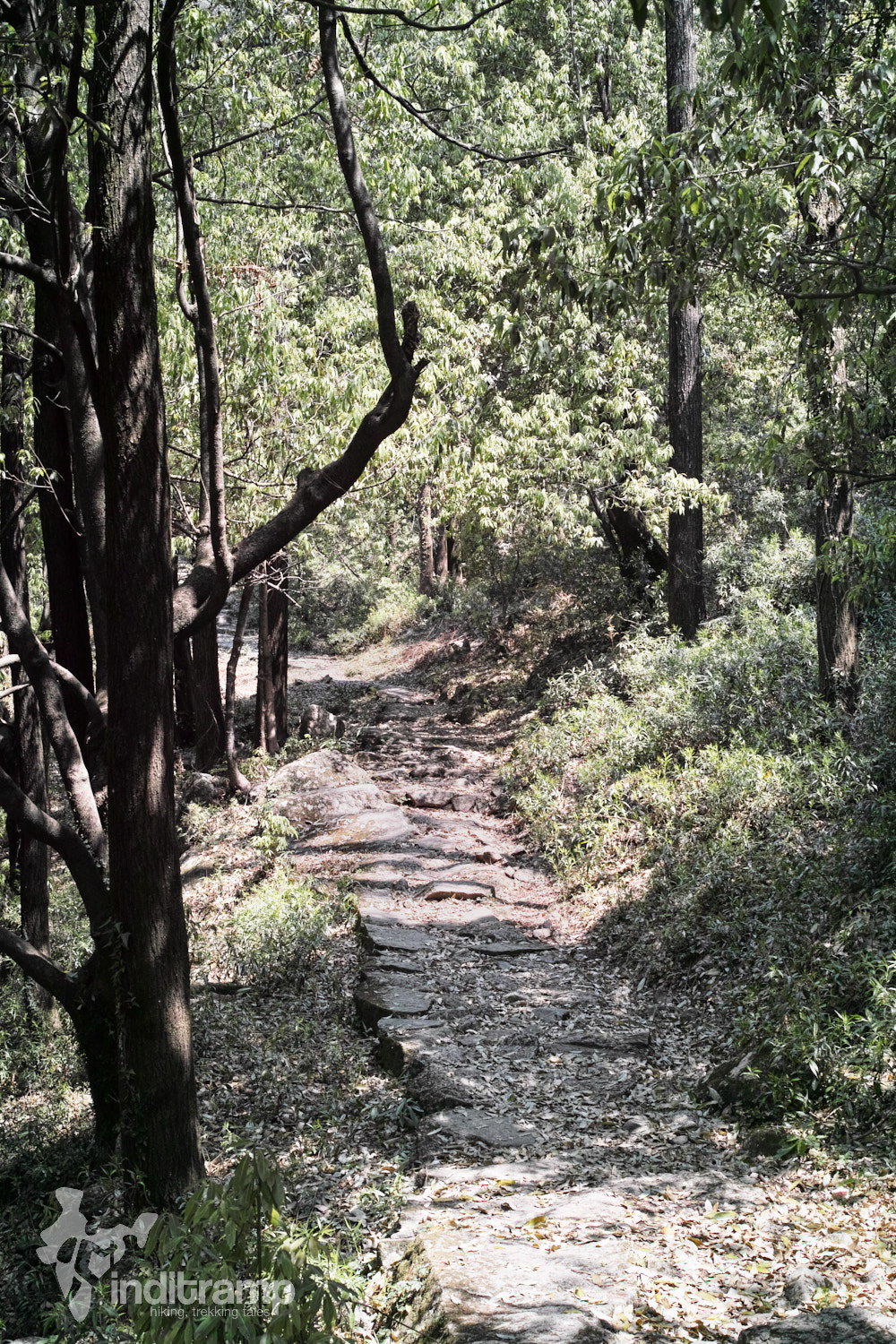 A paved stone path that marks the start of Kareri Lake trek