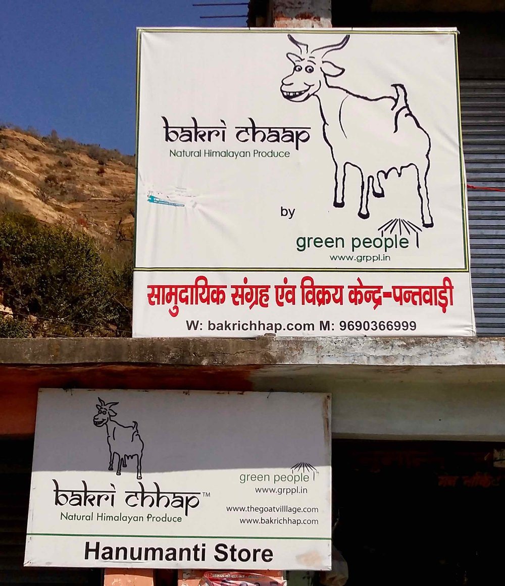 "The sly looking goat that is the mascot for ""Bakri Chhap"" brand that can be found in and around Pantwari village."