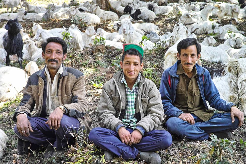 Three brothers from Vijay Rana Dera. With three hundred goats and three Gaddi dogs they were the biggest Dera we met on our way to Nag Tibba from Pantwari.