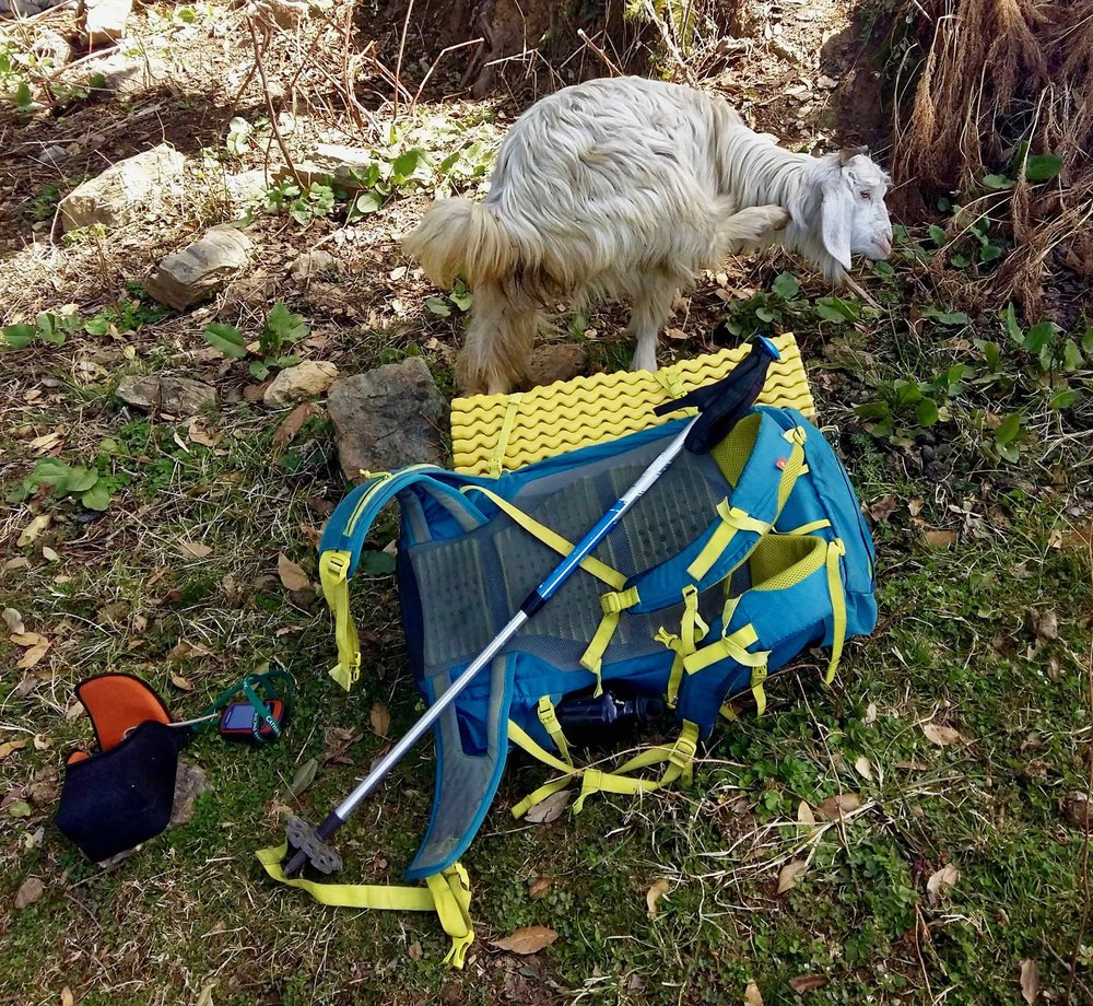 Goats sometimes find your backpack to be the best place to take a dump. Seen here is Forclaz 50 speed backpack with a ThermaRest Sol Lite sleeping pad, Garmin Eterx20x GPS and Forclaz 500 trekking pole and a Coleman water bottle.