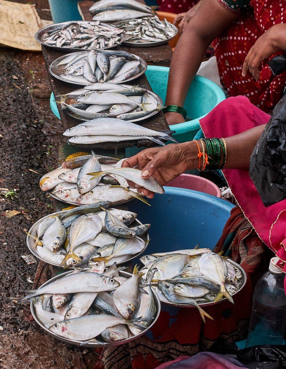 Goa on a fatbike bikepacking Konkan fisherwomen india.jpg