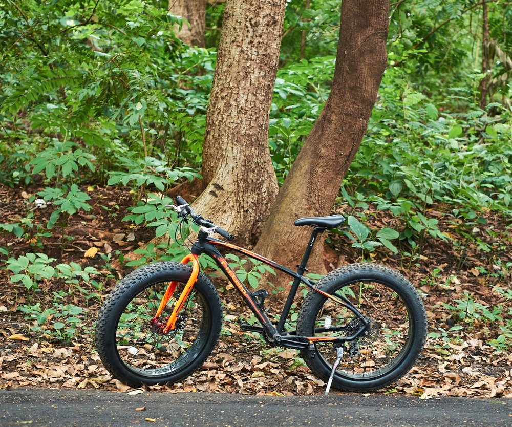 Aarey is a breath of fresh but even more humid air