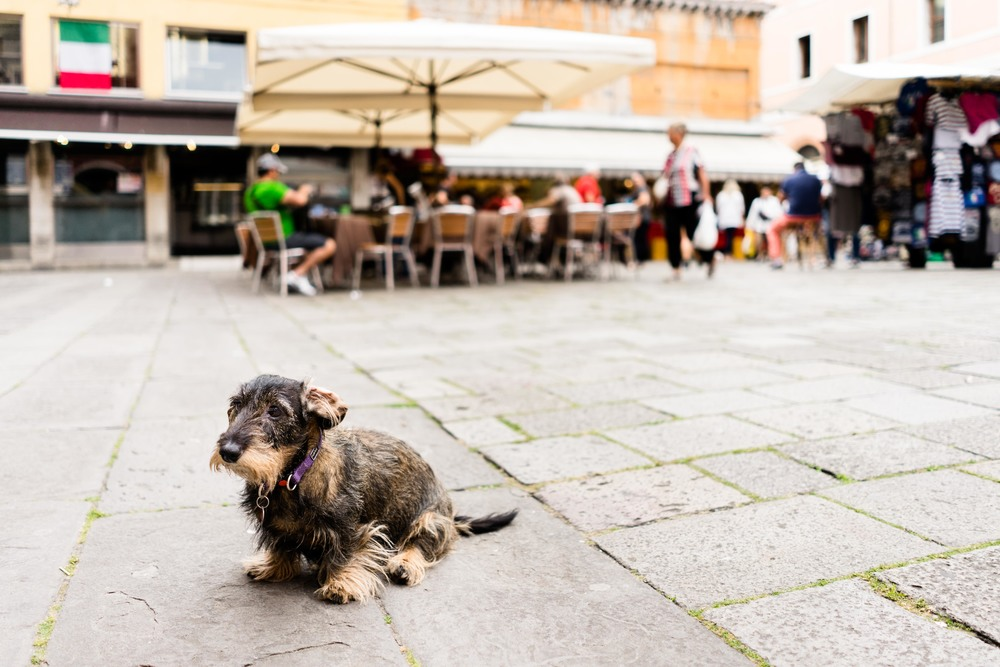 Venice-05794.jpg