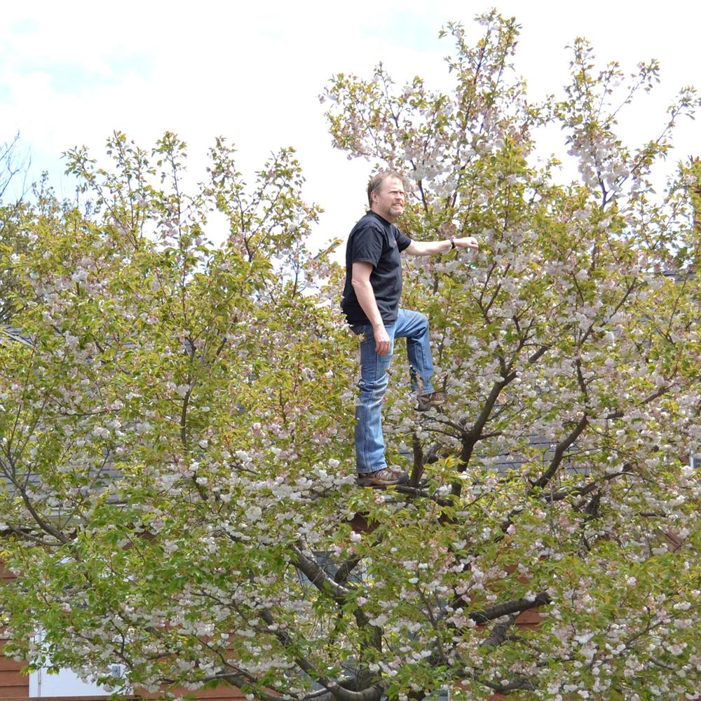 tree man 2.jpg