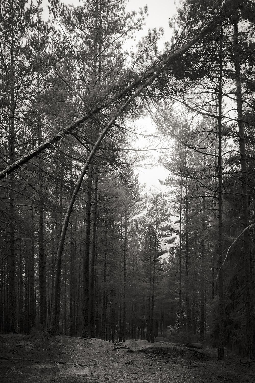 Katedral i skogen