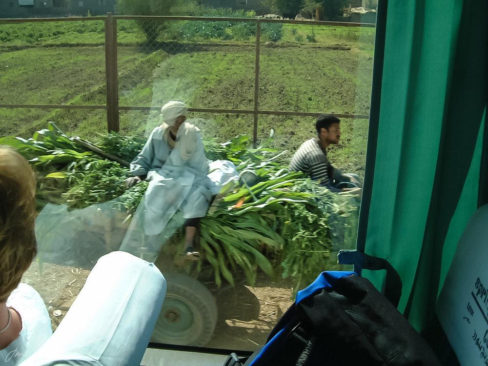 Jordbruket på slettene langs Nilen – sett fra et turistbuss-vindu