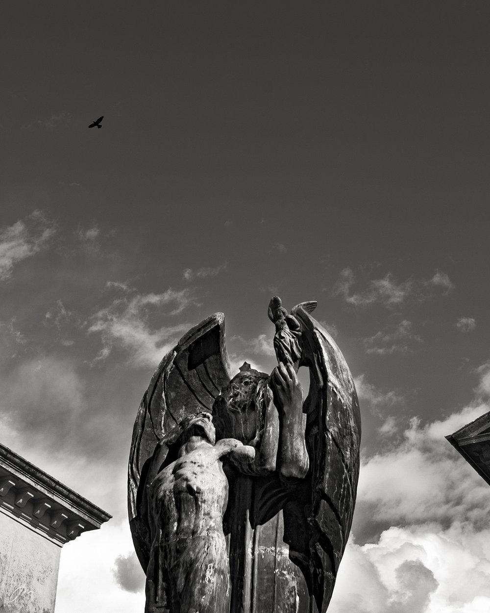 """Fra prosjektet """"Fuglene i Pitigliano 2004"""""""