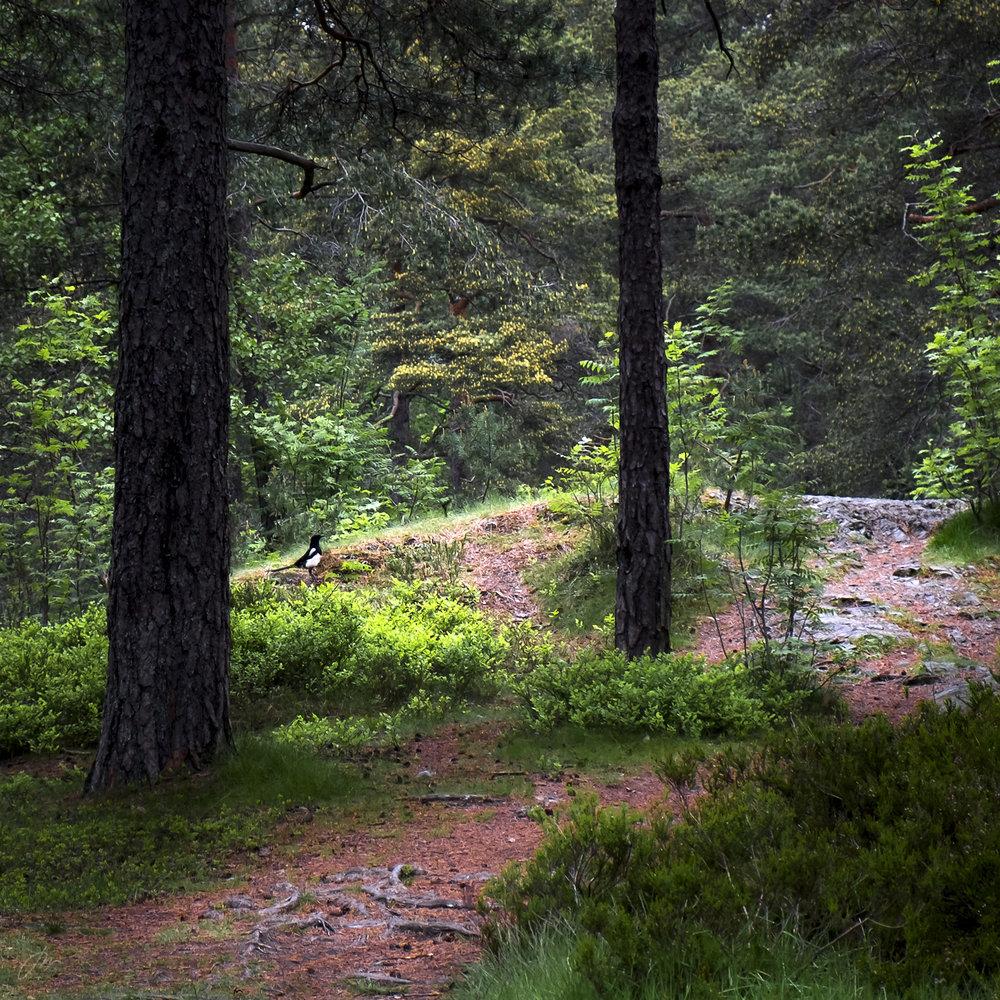 Vi møtes av skogvokteren