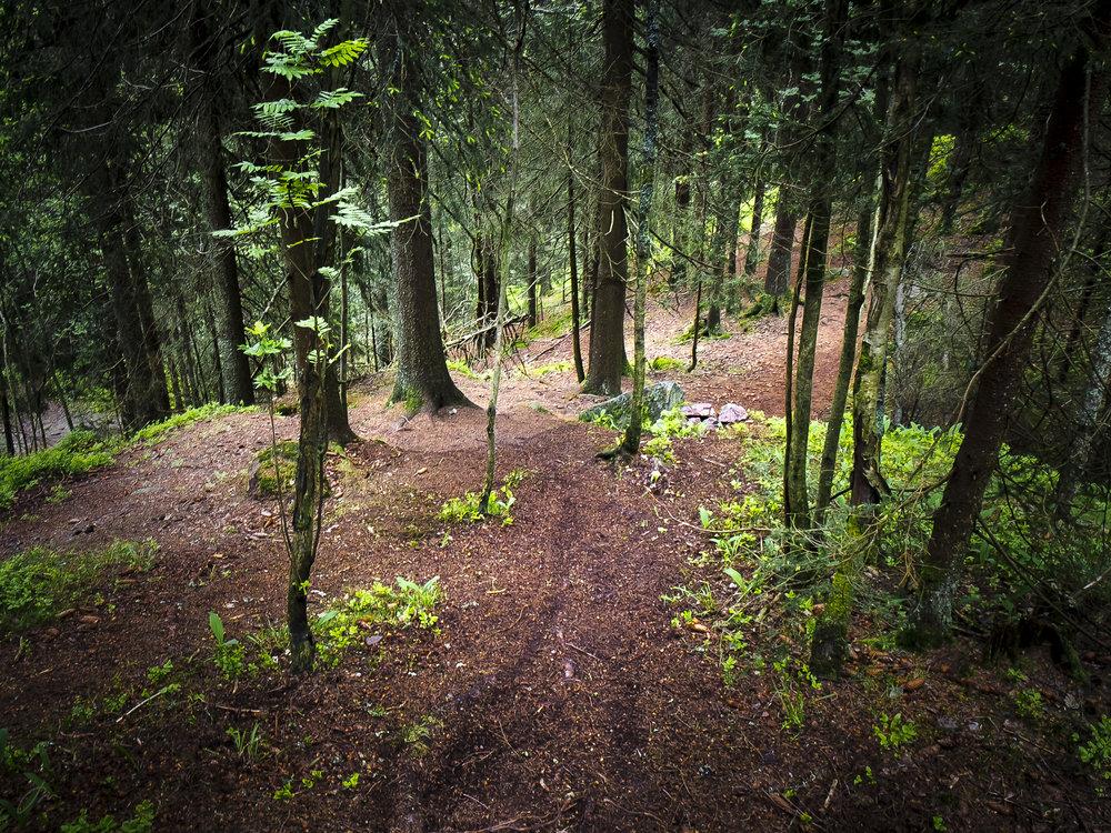 Dagslyset når såvidt ned til skogbunnen