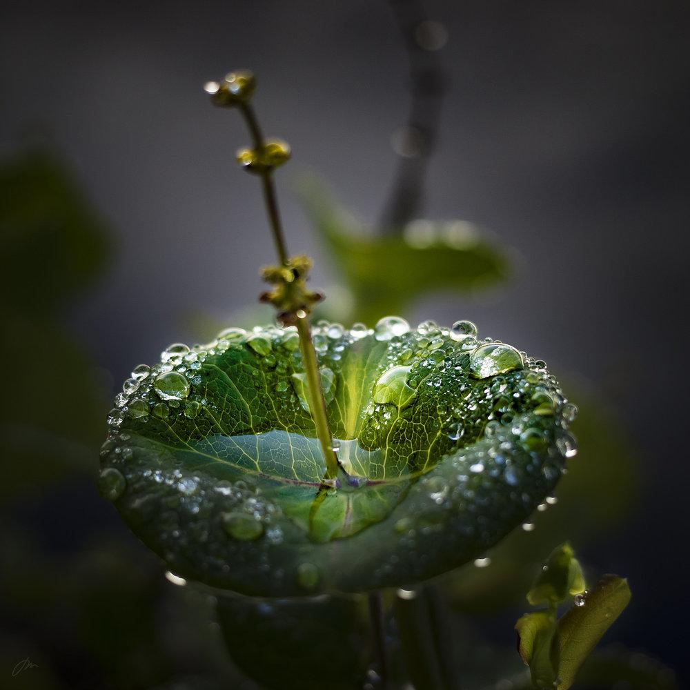 Fontenen – uke 30