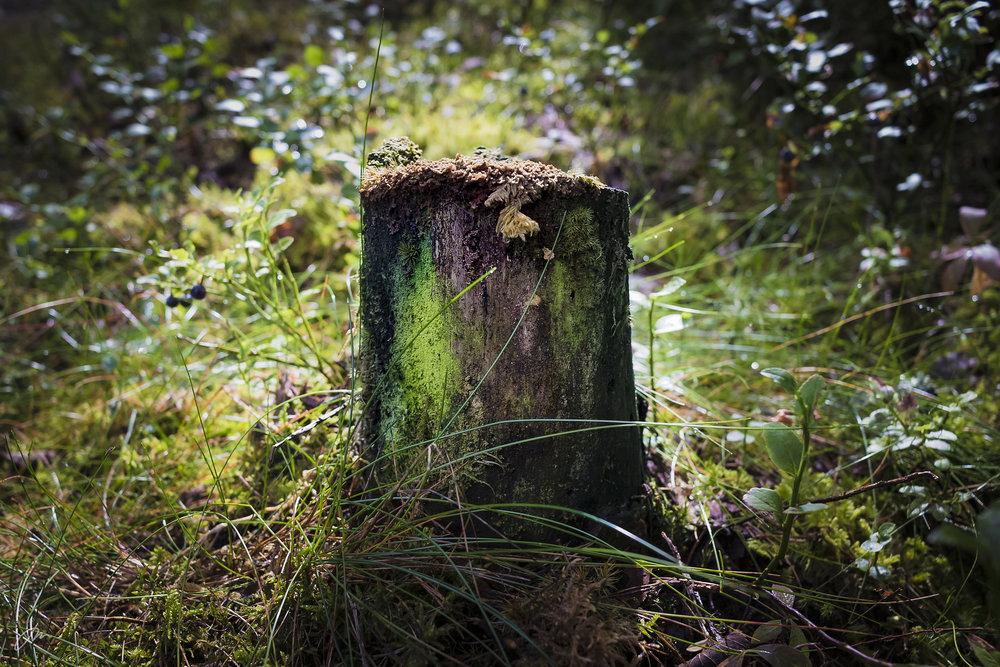 Skogens fargepalett – uke 32