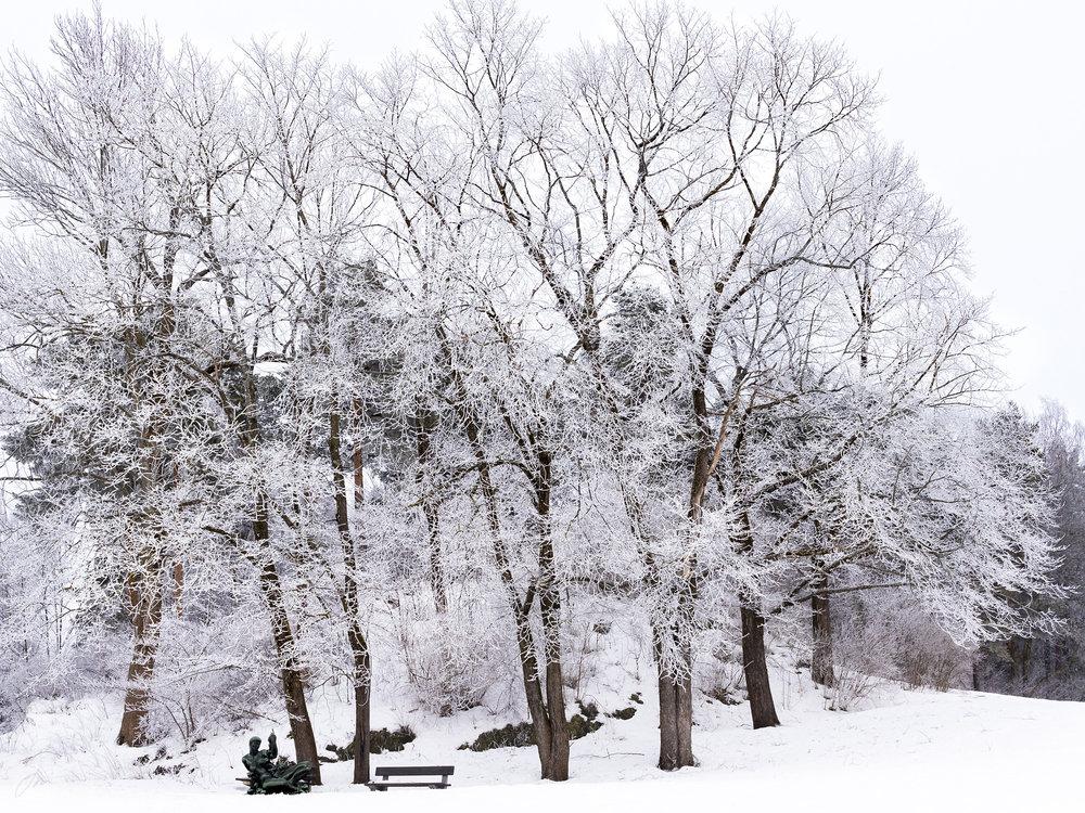 Rimfrost i skulpturparken – uke 4